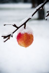 applewithsnow